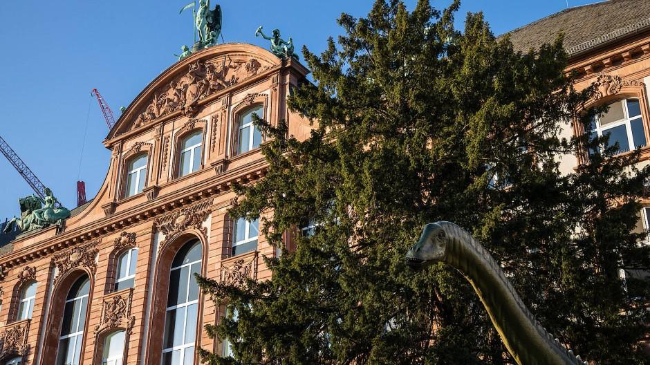 Das Senckenberg Naturmuseum soll einen zusätzlichen Neubau bekommen und sich in den nächsten zwölf Jahren neu aufstellen.