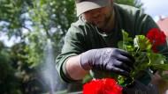 Auch für Arbeiten im eigenen Garten gibt es Steuervorteile