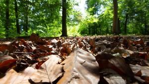 """Waldbesitzer befürchten """"Jahrhundertkatastrophe"""""""