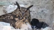Quality time: Zum Schutz der Tiere ist ein Teil der Burg für Besucher gesperrt.