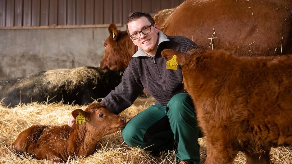 Jedes Kälbchen bekommt einen Namen: Felix Hoffarth bei seinen Rindern im Stall