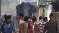 Wilder Elefant irrt durch die Stadt