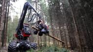 Harvester: Während der Wintermonate wird im Wald Holz geerntet.
