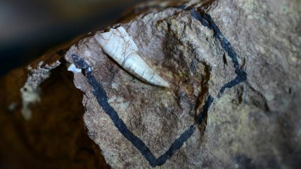 Forscher entdecken Zahn des Korbacher Dackels