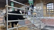 """Frische Milch direkt von der Kuh: Werbegag zur Eröffnung eines """"Naturkind""""-Geschäfts"""