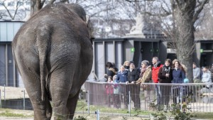 Zoo und Tierpark Berlin wieder geöffnet