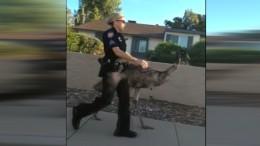 Emu wird von Polizei abgeführt