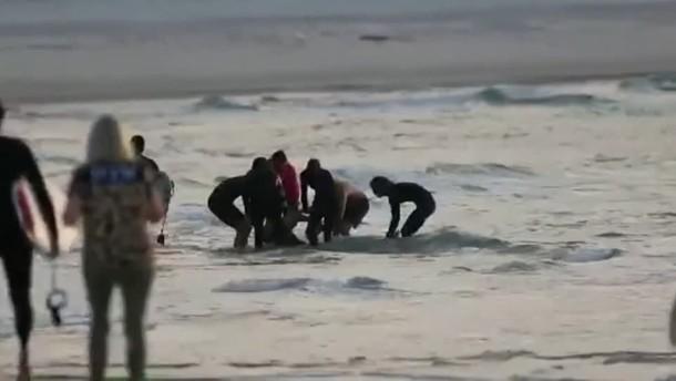 Surfer nach Hai-Attacke gestorben