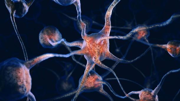 Die Vernetzung der Gehirne