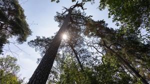 """""""Wenn wir jetzt nichts tun, erleben wir die Entwaldung des Landes"""""""
