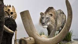 Zeitreise-Safari zu Mammut und Wollnashorn