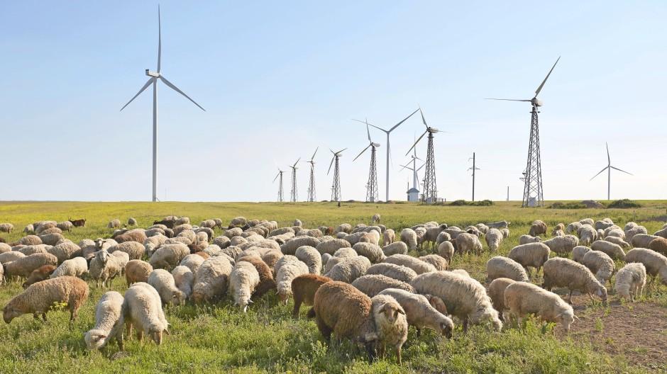 Schafherde und Windräder vereint in Hryhorivka in der Südukraine. Die EU will das Land jetzt auch finanziell unterstützen.