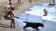 Pudelwohl: Strand nur für Hunde