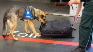 Zollhunde haben den richtigen Riecher