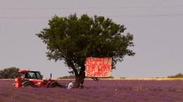 Lavendel-Bauern in der Provence klagen über Influencer
