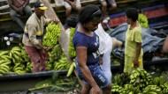 Bananenplantagen in Kolumbien sind von einem Pilz befallen. Betroffen ist die Sorte «Cavendish», die auch nach Deutschland exportiert wird.