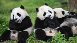 Wie nachhaltig ist Bambus im Bad?