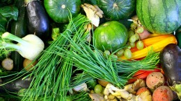 Die Weltreise der Bio-Lebensmittel auf unseren Teller