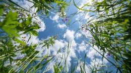 Symphonien aus dem Gras