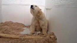 Eisbärbaby ist tot