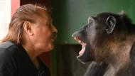 """Klaus Köhler, Direktor des Zirkus """"Belly"""", spielt mit dem Schimpansen Robby."""