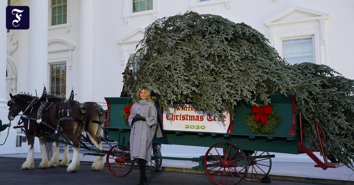 melania-trump-nimmt-ihren-letzten-weihnachtsbaum-im-wei-en-haus-entgegen