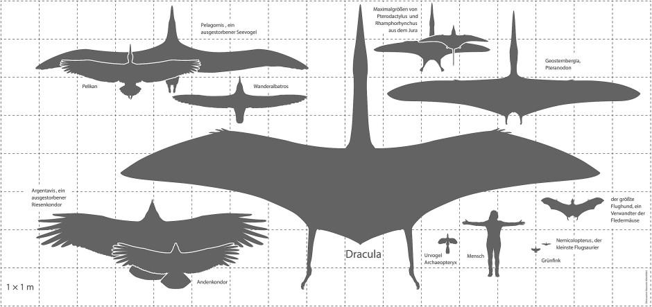 Die Flügelspannweite ist nicht immer alles. Der Mensch hat das mit dem Fliegen bekanntlich etwas anders gelöst.