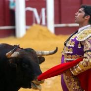 Ein Torero und ein Kampfstier bei einem Stierkampf 2019