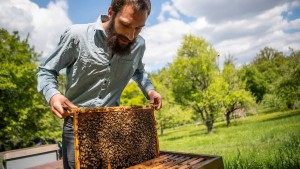 Zu viel Schutz der Bienen