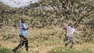 Mitarbeiter des Katastrophenschutzes kämpfen in Kenia gegen einen Schwarm Wüstenheuschrecken.
