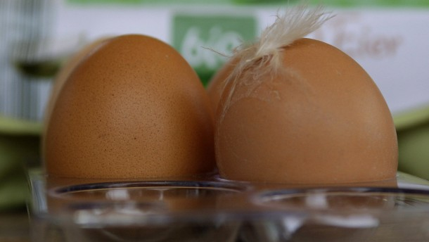 Gift in hessischen Bio-Eiern entdeckt