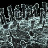 Ungiftig, künstlich herstellbar und leicht abzubauen: Polyphosphate werden von den Blutplättchen gebildet und kommen in allen menschlichen Zellen vor