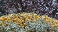 Nach dem Kälteinbruch bleiben die Aussichten trübe