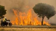 Waldbrand wütet im Süden Spaniens