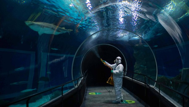 Wie ein Aquarium in Rio seine Zukunft retten will