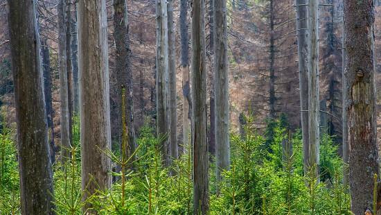 BUND warnt vor Waldsterben durch Klimakrise