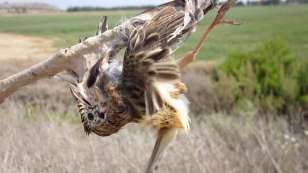 Die Jagd auf Zugvögel