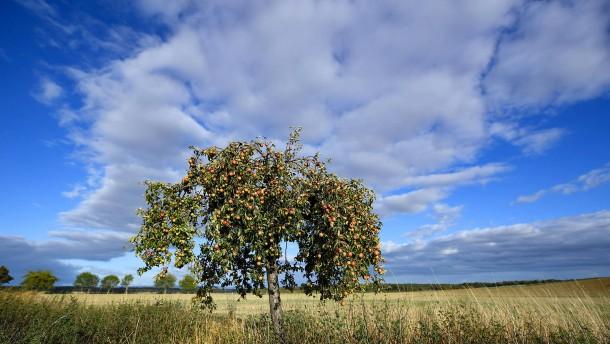Luft aus Skandinavien sorgt für Abkühlung