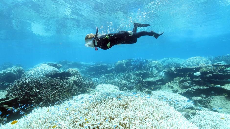 Eine Taucherin über ausgebleichten Korallen im Great Barrier Reef vor Australiens Nordostküste