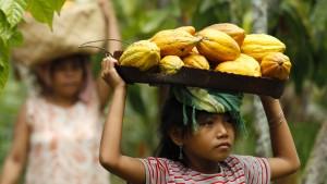 Das behagliche Schattendasein des Kakaobaums