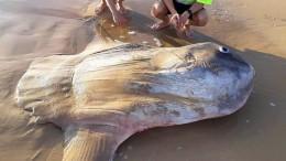 Toter Mondfisch in Australien angespült