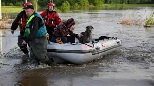Die große Hunde-Evakuierung