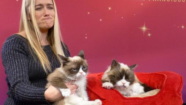 grumpy cat  figur bei madame tussauds ausgestellt