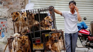 China verbietet Hundefleisch-Verkauf auf Festival