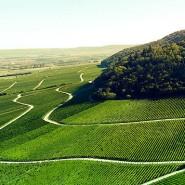 Die Anbaufläche des fränkischen Winzers Paul Weltner beträgt elf Hektar und teilt sich in vierzig Parzellen auf.