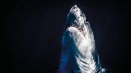 Die Ozeane verlieren Sauerstoff – und Fische ihren Lebensraum