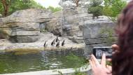Besucherandrang: Die Pinguin-Anlage lockt seit diesem Frühjahr viele Besucher an. Trotzdem muss die Stadt ihren Zuschuss seit Jahren erhöhen.