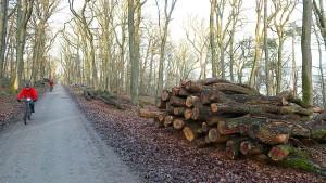 Therapie für den Hofheimer Wald