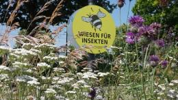 Warum Ackerdisteln und die Gemeine Schafgarbe weichen müssen