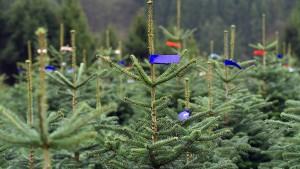 Riesiger Weihnachtsbaum sorgt für Spur der Verwüstung